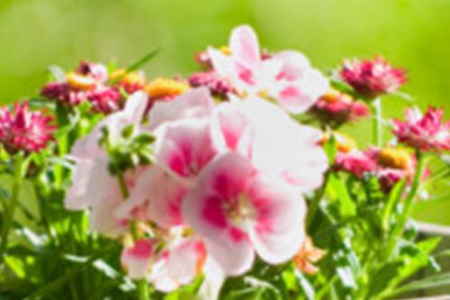 Frühlingsgarten - Collage